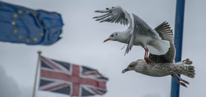 Welsh photographs, The Brexit divide (N11 21)