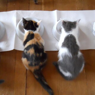Jon Kabat-Zinn - Lezioni dal cibo per gatti